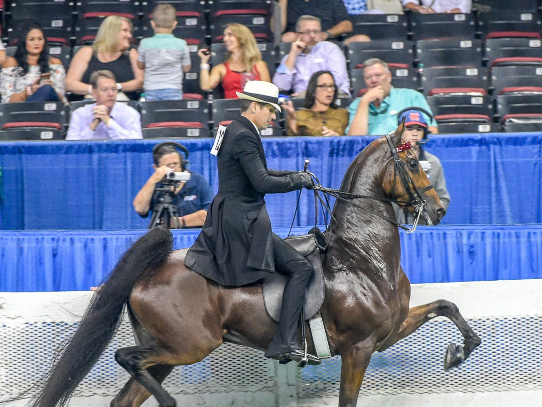 ASR SWEEPSTAKES 4 YEAR OLD 3 GAITED winnerSmart Fortune (126586G) (WC) 2014 Mountainview's Heir To Fortune (110645S) (WC) X Smart Asset (131808M) Owner: Hillcroft Farm LLC Paris, KY Breeder: Emily Lee Exhibitor: Daniel LockhartTrainer: Larry D. Hodge