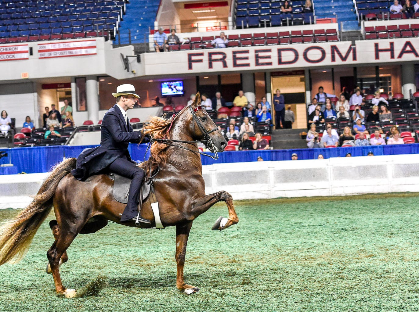 Reining World Grand Champion 5 Gaited Champion Top Of The Mark and trainer Tre' Lee trot into Freedom Hall to win the qualifying class