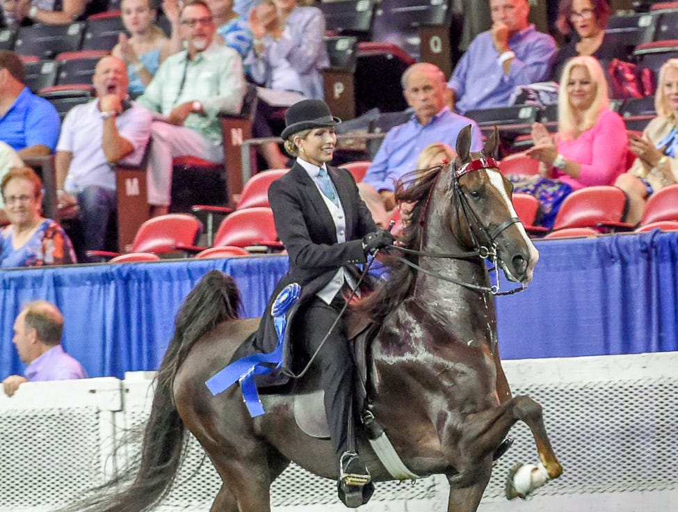 5 GAITED JUNIOR MARE winner 