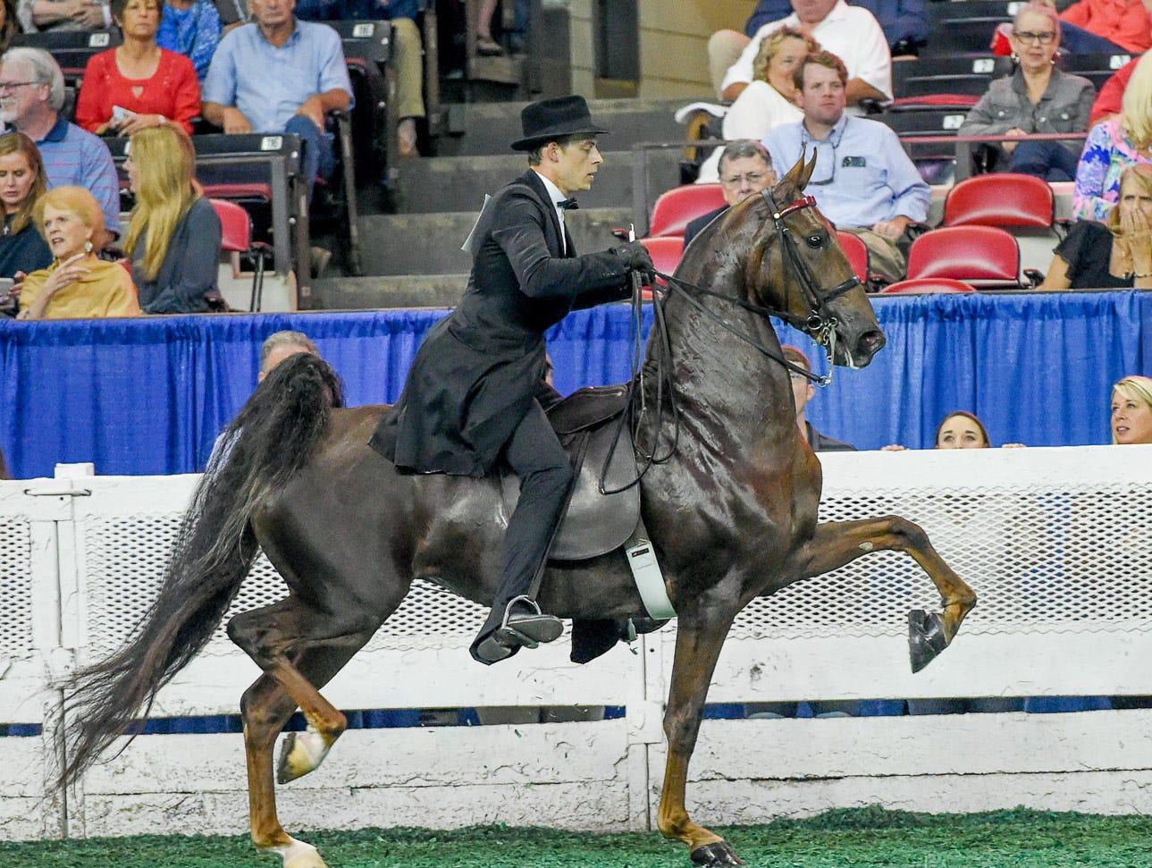 Now Performing Nightly (151819M) (RWC) 2014 Mountainview's Heir To Fortune (110645S) (WC) X Twice Nightly (143318M) (RWC) Owner: CC Saddlebreds LLC Louisville, KY Breeder: CC Saddlebreds LLC Exhibitor: Tyler DevoreTrainer: Tammy Devore