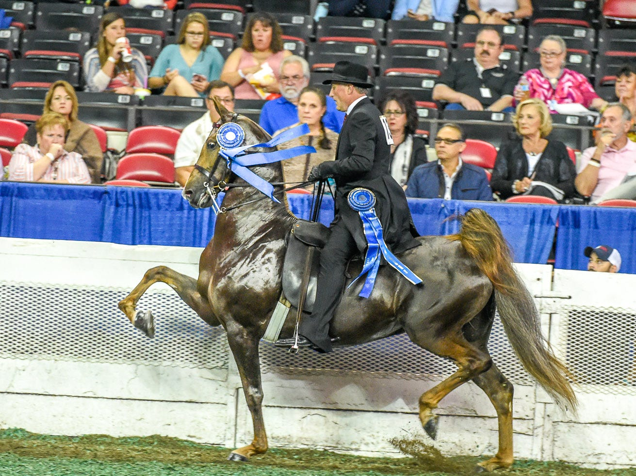 3 GAITED 15.2 & UNDER JUNIOR winner 