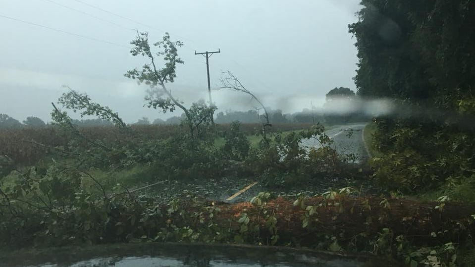 Two trees fell across Rosenwald Road south of Bonita as heavy storms moved across the region Monday afternoon.