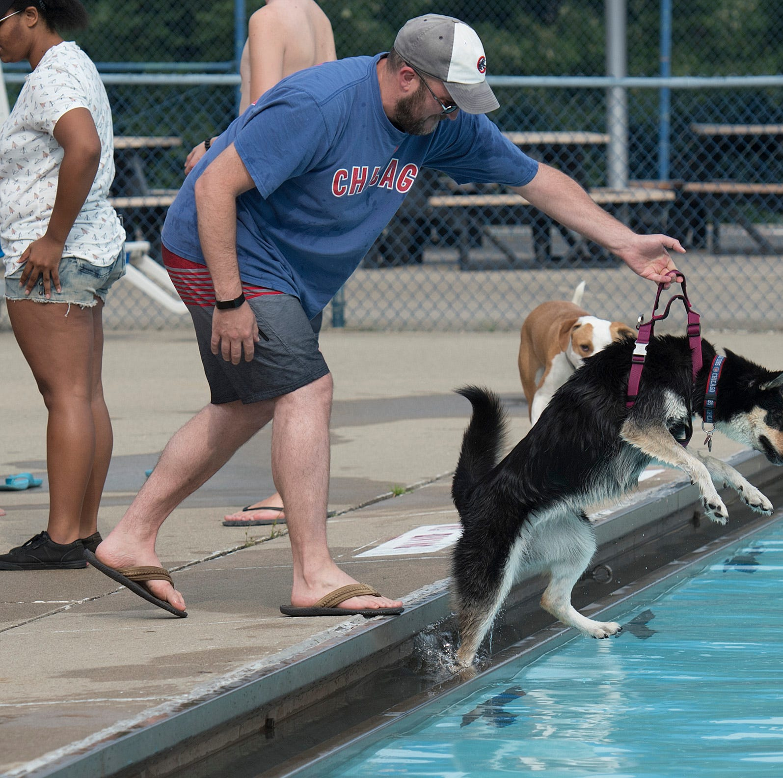 To the dogs! As Livonia city pools close for humans, they open for pooches