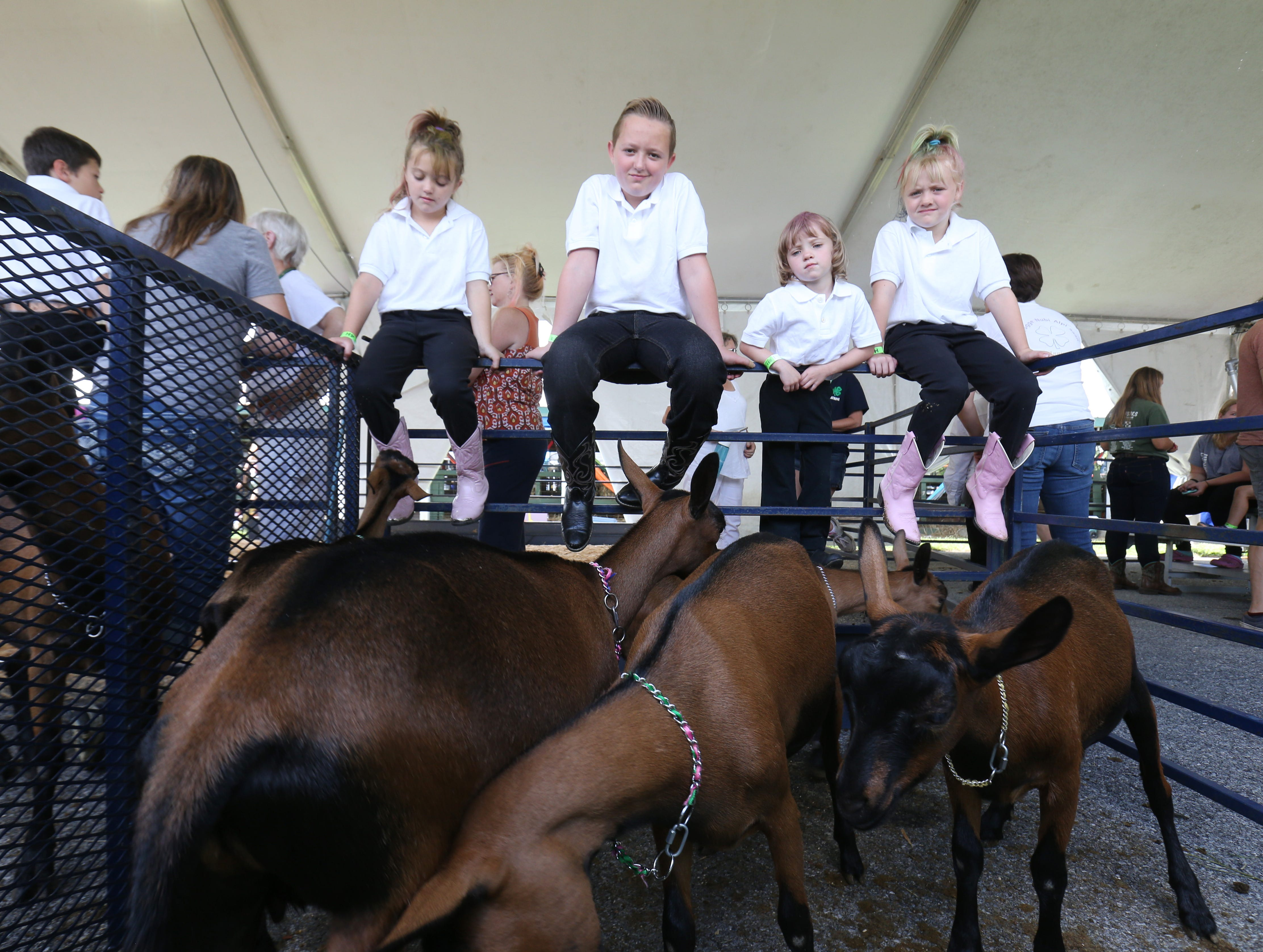 From left Sienna, Frankie, Jesse and Kendra Carpentieri of LaGrangeville with the goats they are showing on the opening day of the Dutchess County Fair in Rhinebeck on August 21 2018.  The Carpentieris are members of the Kids 4 Kids Dairy Goat Club.