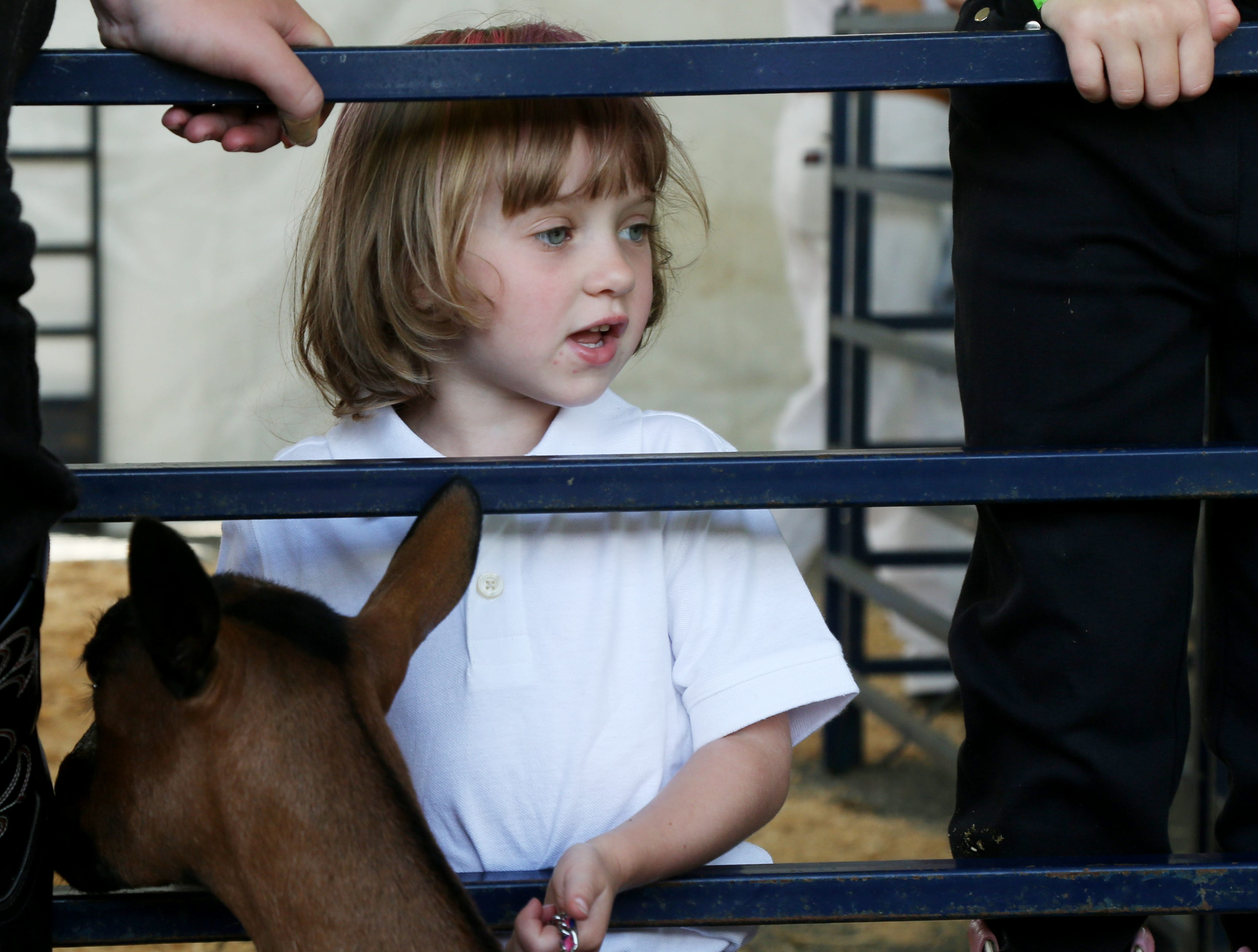 Jessa Carpentieri of the Kids 4 Kids Dairy Goat Club holds on to a goat she is showing at the Dutchess County Fair in Rhinebeck on August 21 2018.