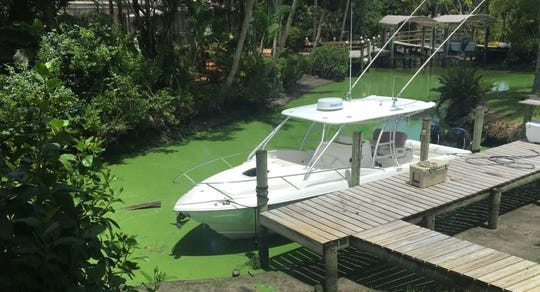 Algae can be seen Aug. 20, 2018, clogging the canal behind Southwest Bittern Street in Palm City