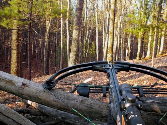 Crossbow On Tree Trunk