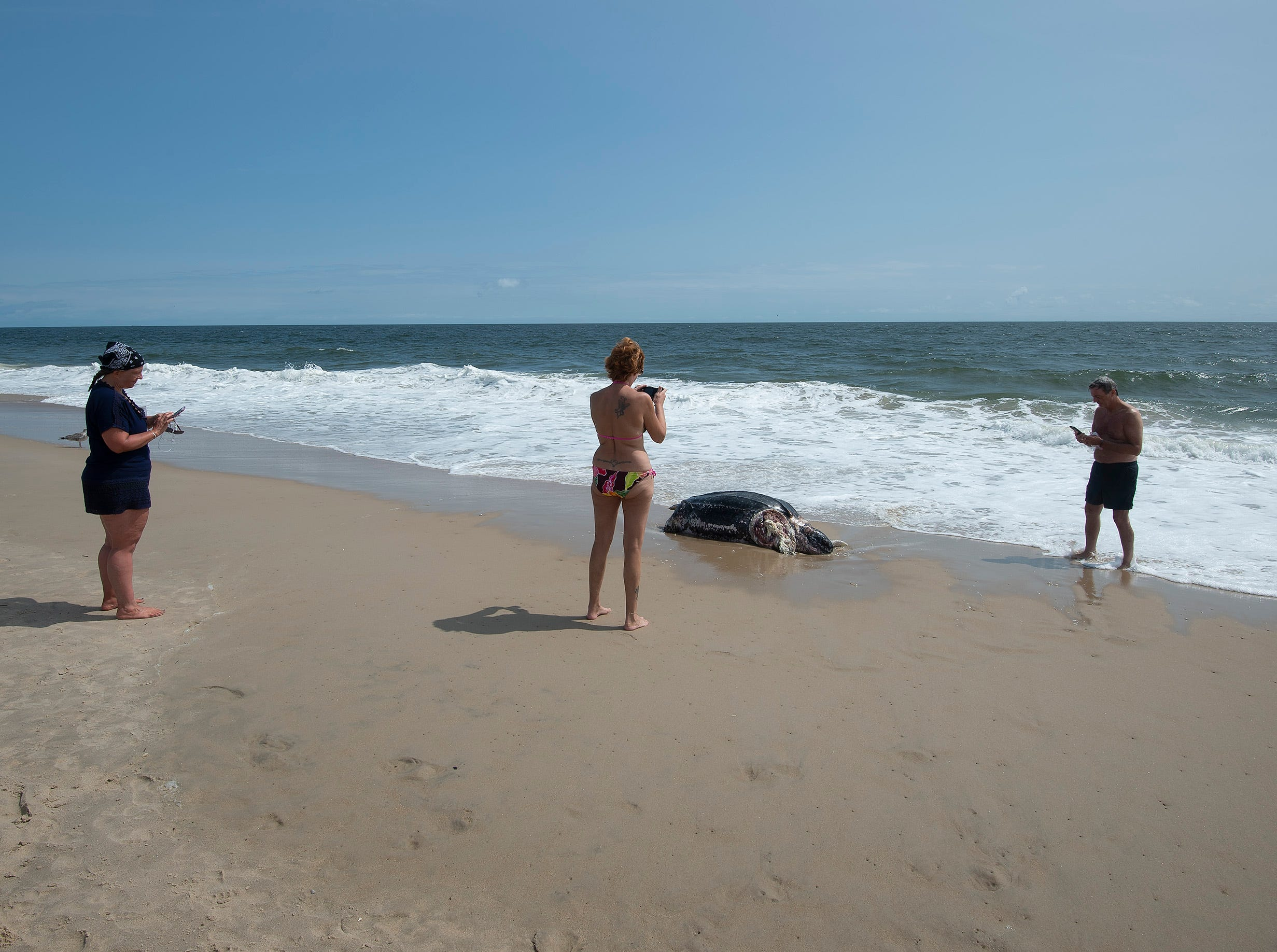 Beachgoers look at a leatherback sea turtle that washed up along the Delaware Seashore State Park Beach, Tower Road south of Dewey Beach.