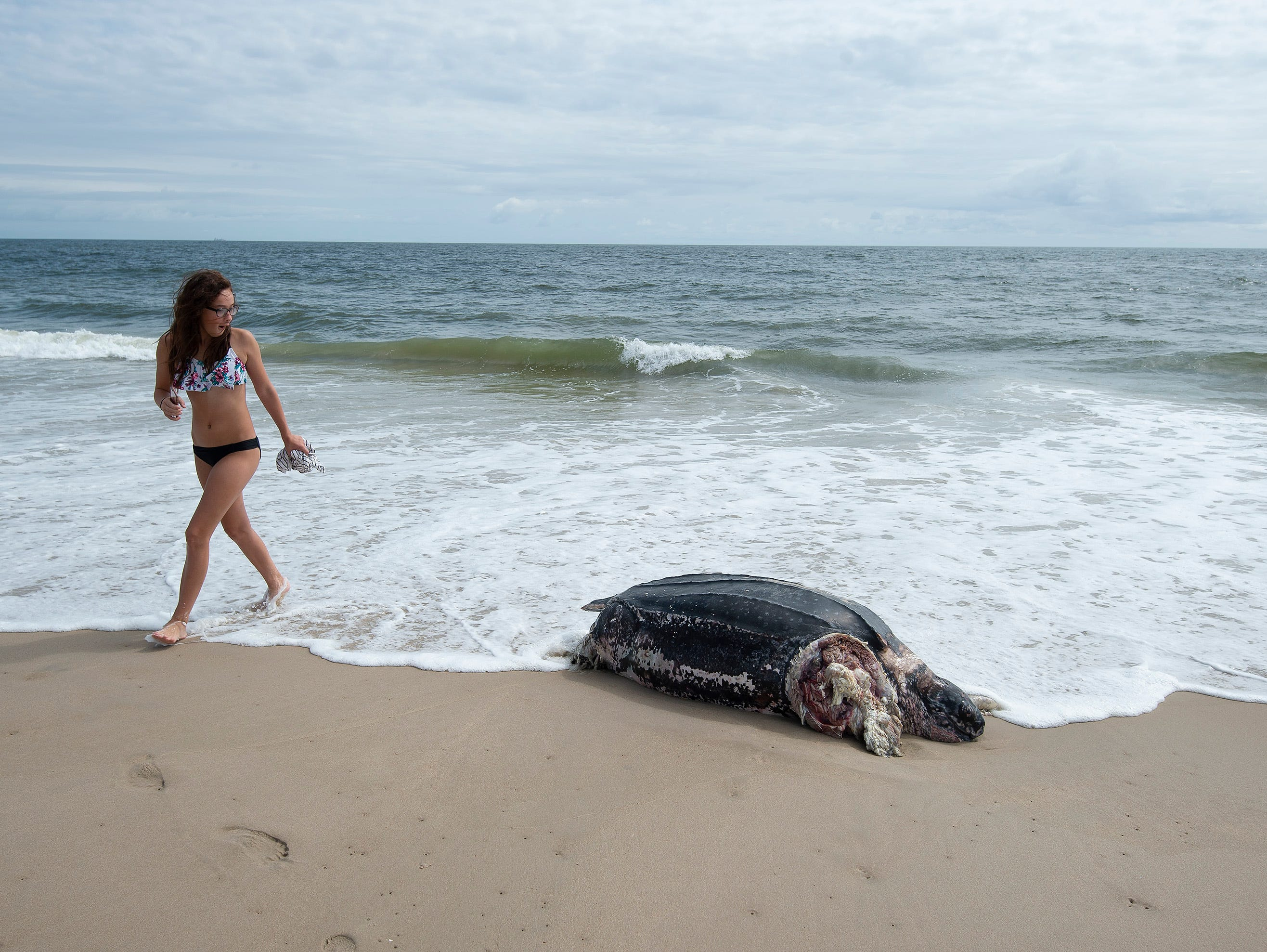 A beachgoer looks at a leatherback sea turtle that washed up along the Delaware Seashore State Park Beach, Tower Road south of Dewey Beach.