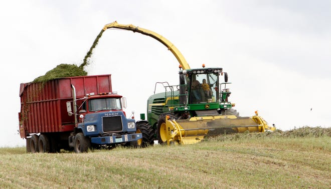 A Washington County alfalfa field is cleared as hay is chopped into a truck. Fourth crop alfalfa in northern Wisconsin was short due to a lack of rain.