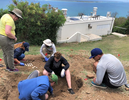 McMurry University students dug for iguana eggs, which then were destroyed to control that animal population on Puerto Rico.