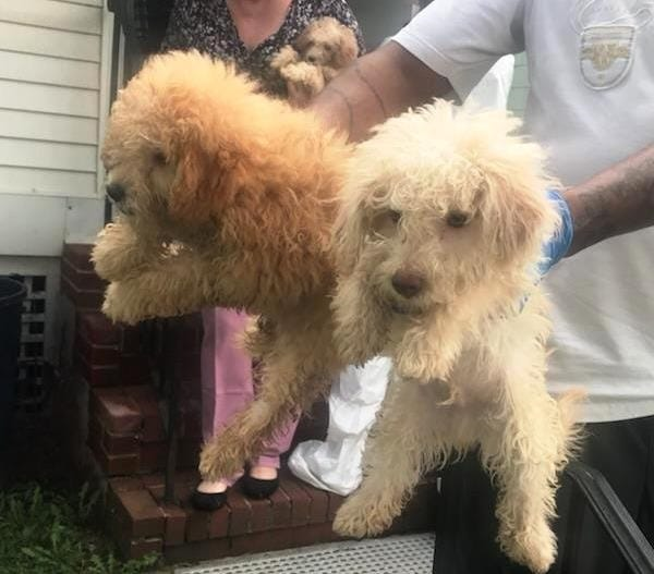 Two of the dogs rescued in Elizabeth.