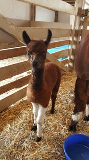 Fondy Parkher was born unexpectedly at the Exchange Club of Fond du Lac Petting Zoo in Lakeside Park on Aug. 7.