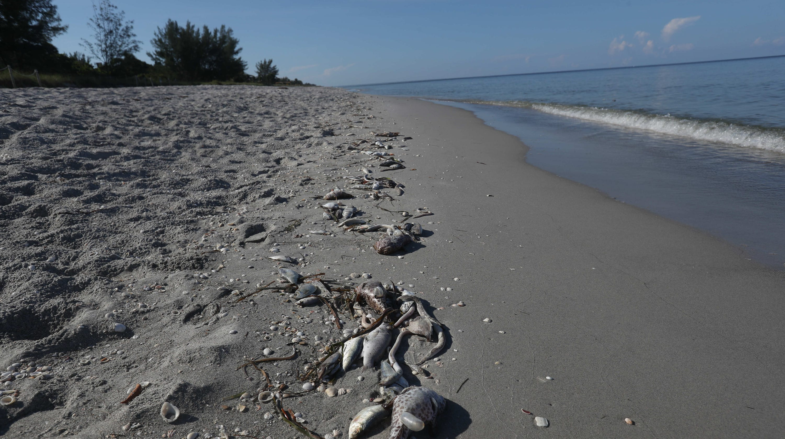 Florida Algae Crisis Red Tide Numbers Stay Strong Along Swfl Coast