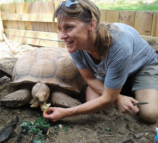 Jennifer Doll, DVM, has a passion for patching up sick or unwanted rescue animals, such as this 50-pound tortoise.  Those not adopted or released into the wild often end up staying on at her Witty Kitties shelter near Shueyville.