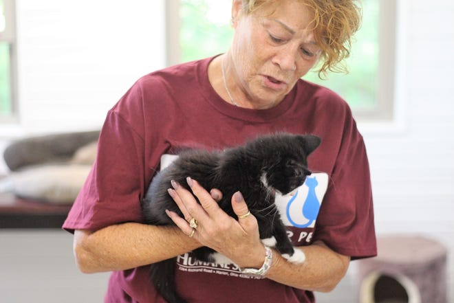 Sandy Azaroff with the Marion Area Humane Society cradles a cat at the organization's shelter on Richland Road Wednesday morning.