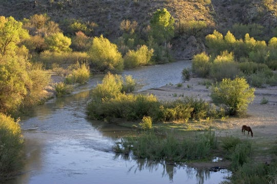 A horse grazes next to the Gila River in eastern Arizona.