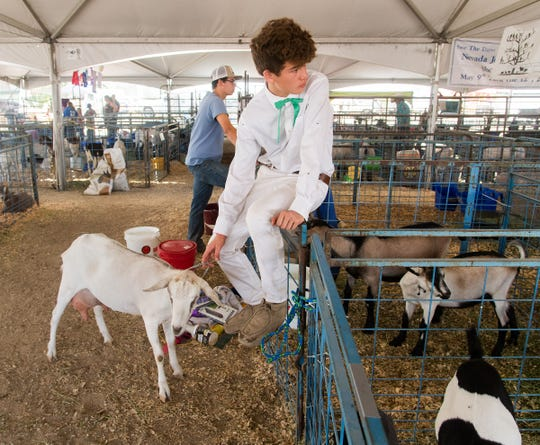 Daniel Cazares, from the Carson City 4H, watches the judging.
