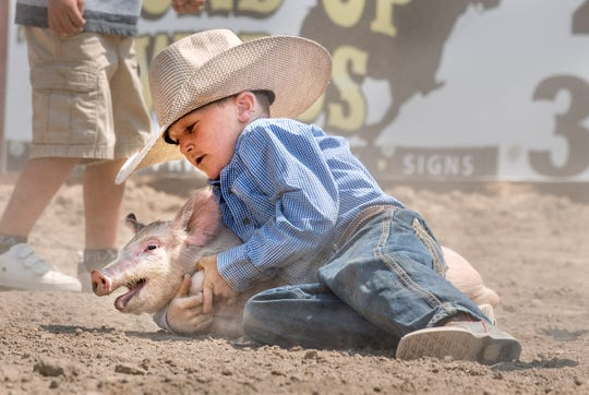 A young wrangler manages to capture a pig during the pig scramble.