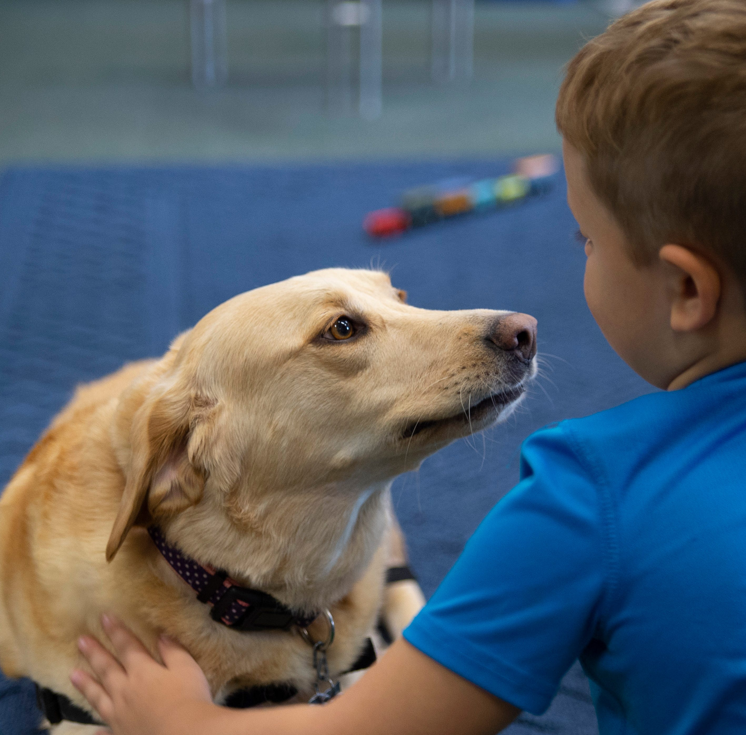 Ivy Tech preschool's therapy dog provides emotional, social support to classroom