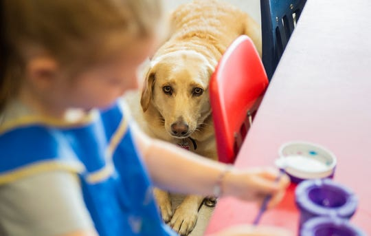 Shelby, a therapy dog, watches a preschool student paint in a classroom at Ivy Tech Community College on Wednesday, Aug. 22, 2018.