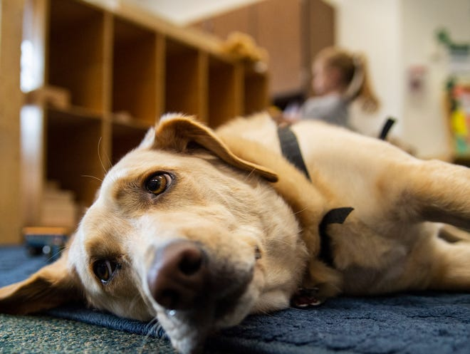 Shelby, a therapy dog, lays down in a preschool classroom at Ivy Tech Community College on Wednesday, Aug. 22, 2018.