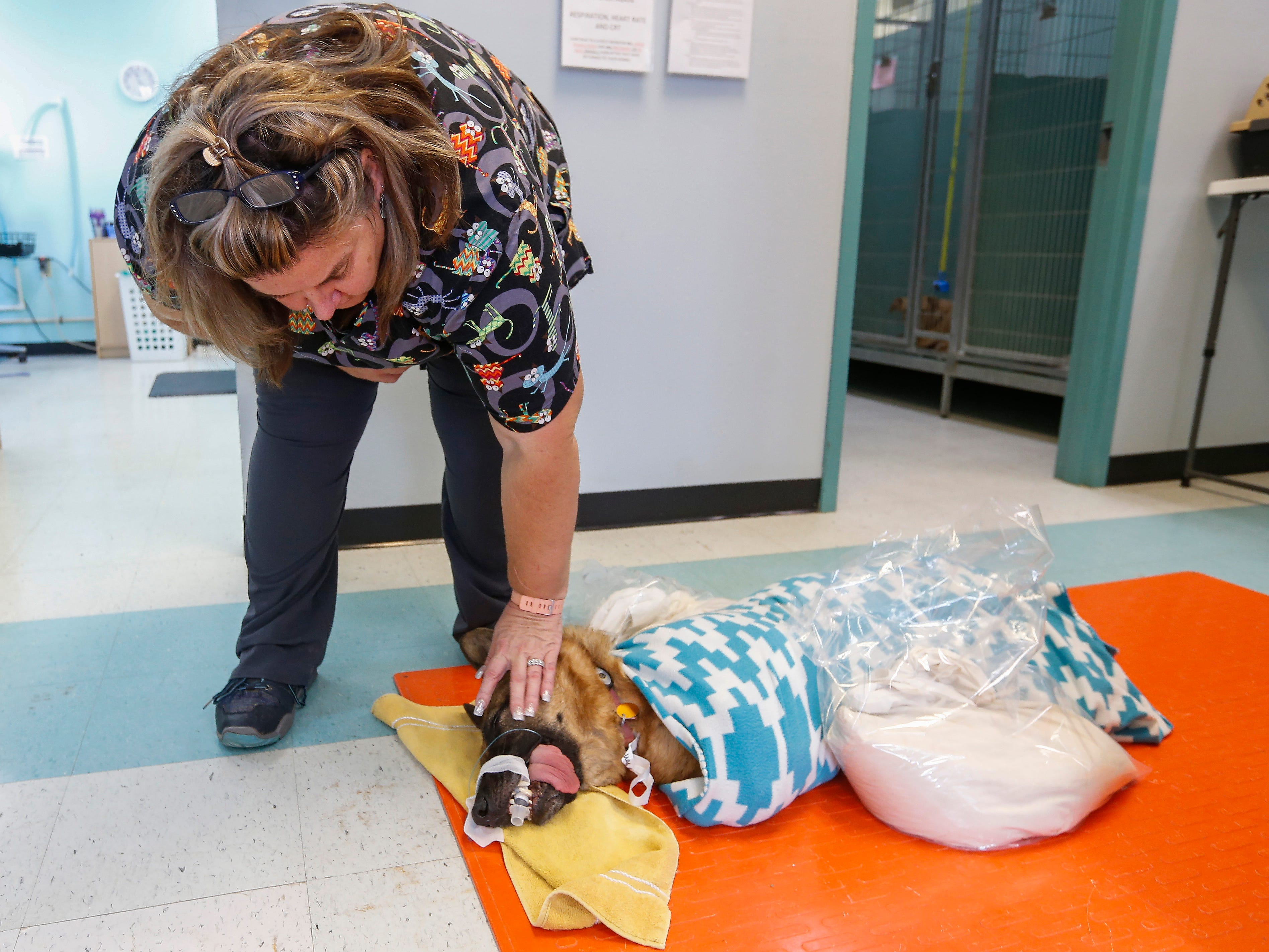 Schannon Beasley checks to see if a dog is starting to wake up after an operation at SAAF on Tuesday, Aug. 22, 2018.