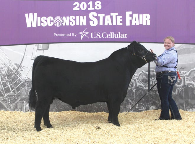 Thornberry Skywalk 2247 won grand champion bull at the 2018 Wisconsin State Fair Angus Show, Aug. 11 in West Allis, Wis. Claire Hawthorne, Westby, Wis., owns the February 2017 son of Silveiras Style 9303. He first claimed junior champion.