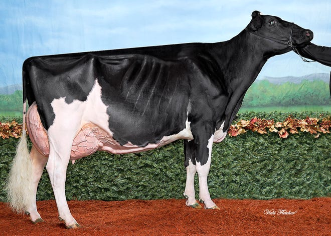 Six year old Tk-Plain-View Ripley owned by Milk Source LLC of Kaukauna walked away with grand championship honors at the 2018 Wisconsin Summer Championship Holstein Show hold Aug. 21 at the Alliant Energy Center in Madison.