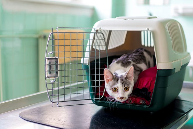 Make sure you have a pet carrier for each of your small pets.