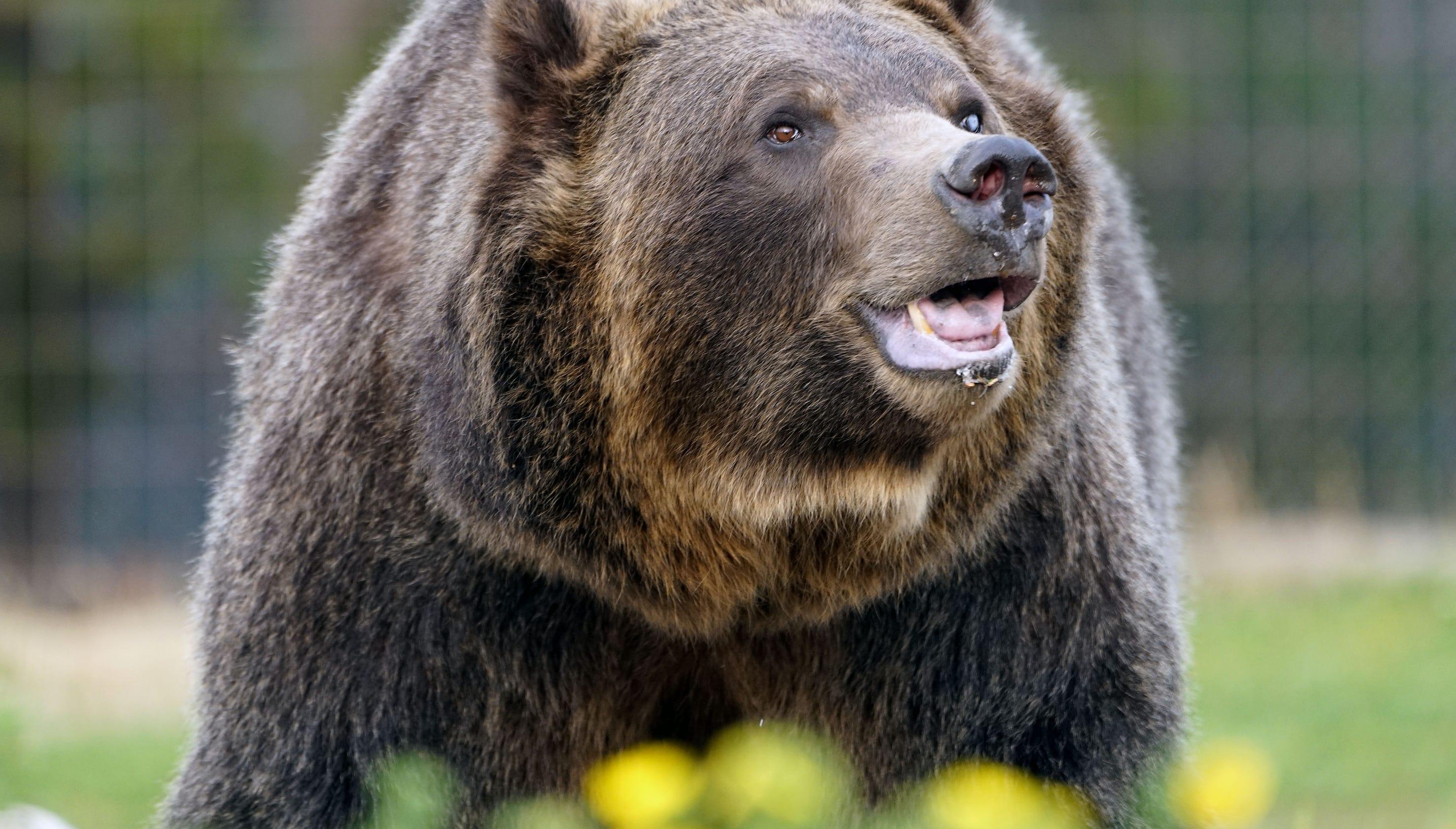 bears xxx
