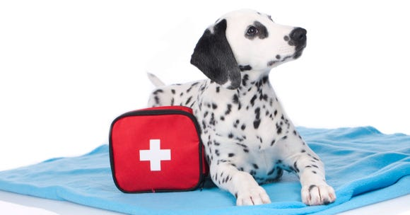 Your emergency preparedness plan should include your furry family members, too.