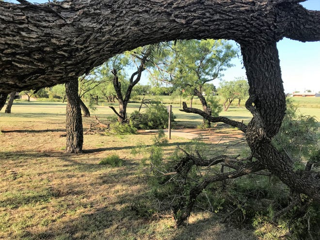 The disc golf course at Cal Young Park has some additional obstacles following Wednesday's thunderstorm. Numerous tree limbs were broken by the storm.