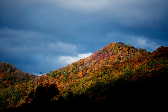 Trees along the Blue Ridge Parkway in full autumn color October 22, 2016.