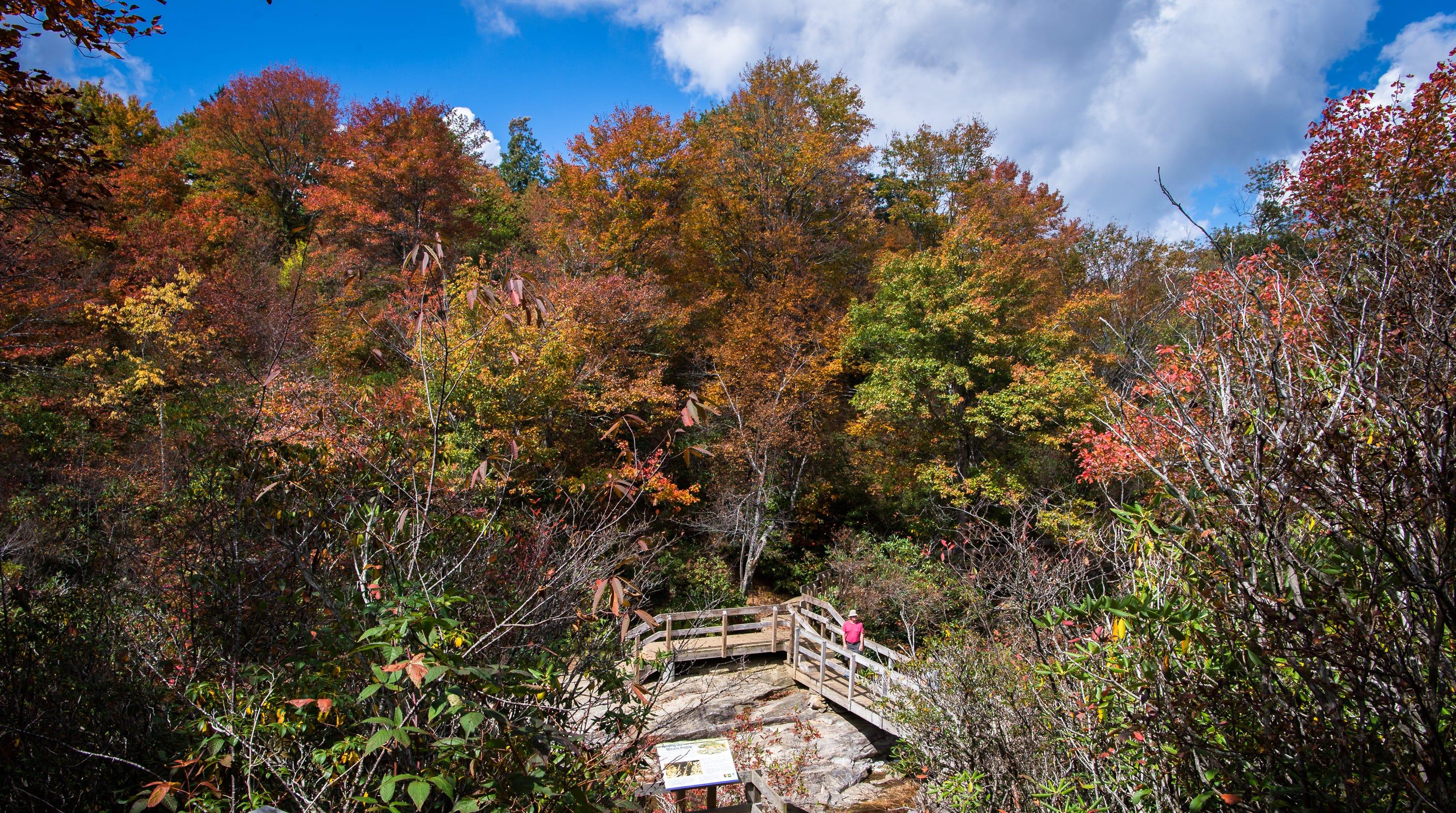 WNC Leaf Experts Give Their 2018 Fall Foliage Forecast