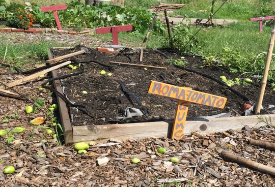 Green tomatoes are scattered in the soil at a vandalized garden at The Neighborhood Center in Camden.