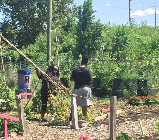 Ajane Cates, 15, and Samajai Atkins, 14, remove vandalized plants at an urban farm at The Neighborhood Center in Camden.