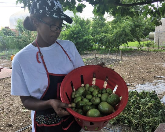 """Shatich """"Miss T"""" Livingstone, master gardener at The Neighborhood Center in Camden, displays green tomatoes salvaged from vandalized plants at an urban farm."""