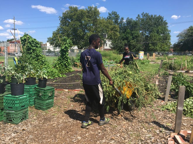 Delier Bettis, 17, and Samajai Atkins, 14, remove vandalized tomato plants from an urban farm at The Neighborhood Center in Camden.