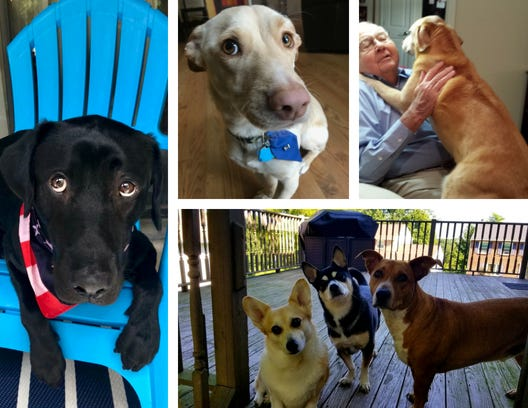 For #NationalDogDay, we present the Dogs of the Enquirer.