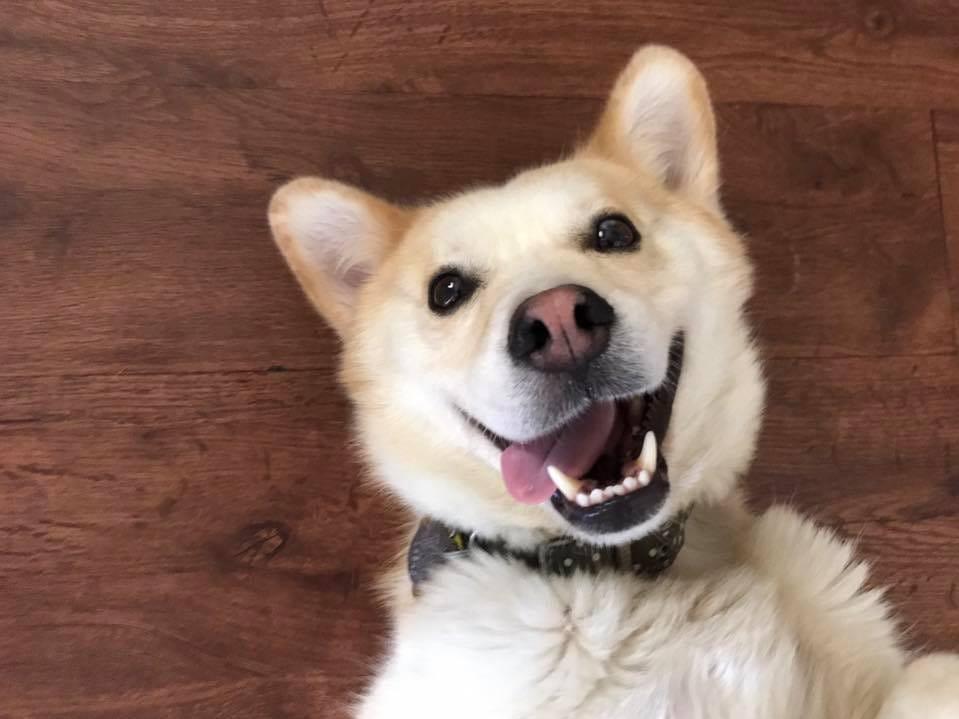 Mallorie Sullivan's superstar dog Ollie.