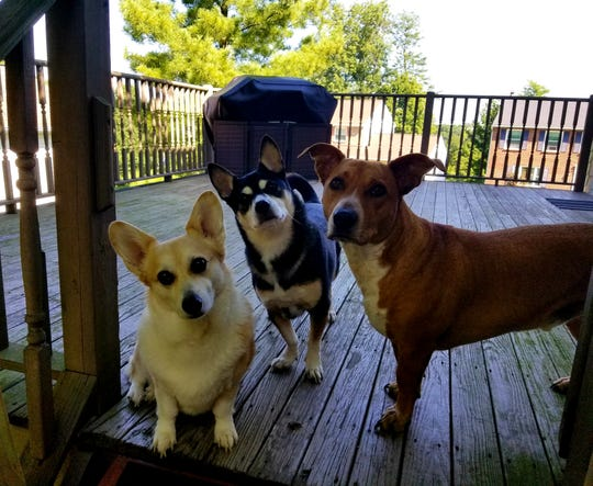 This magnificent trio - MissFit, Monty and Mumford - belong to Stephen Wilder