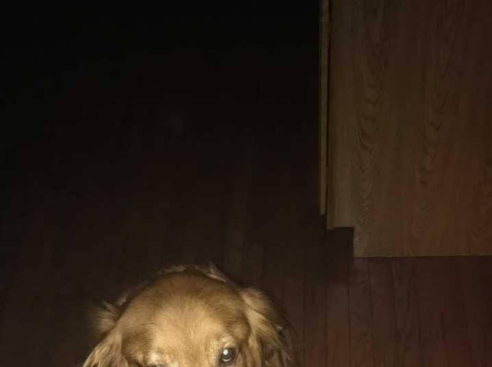 Shelby Dermer's dog Cash is a good hunter