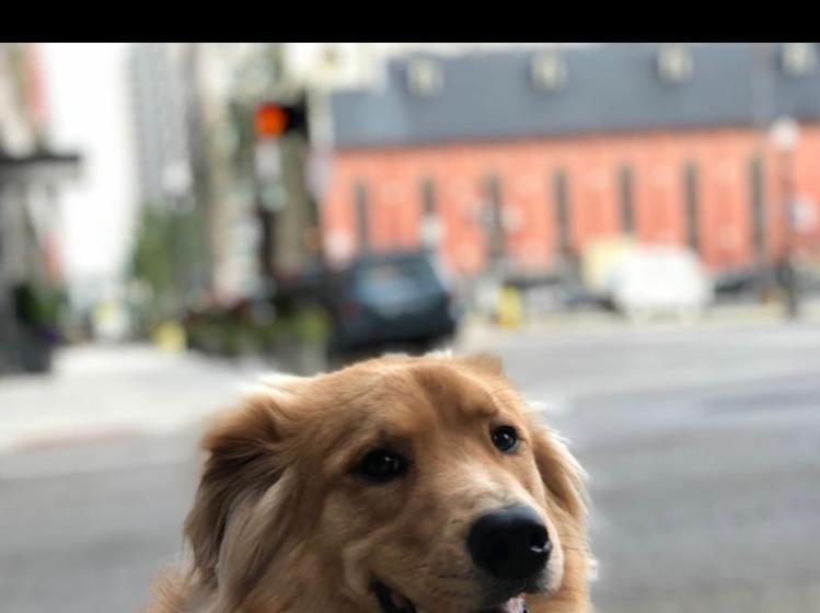 Mike Betz's dog Hank
