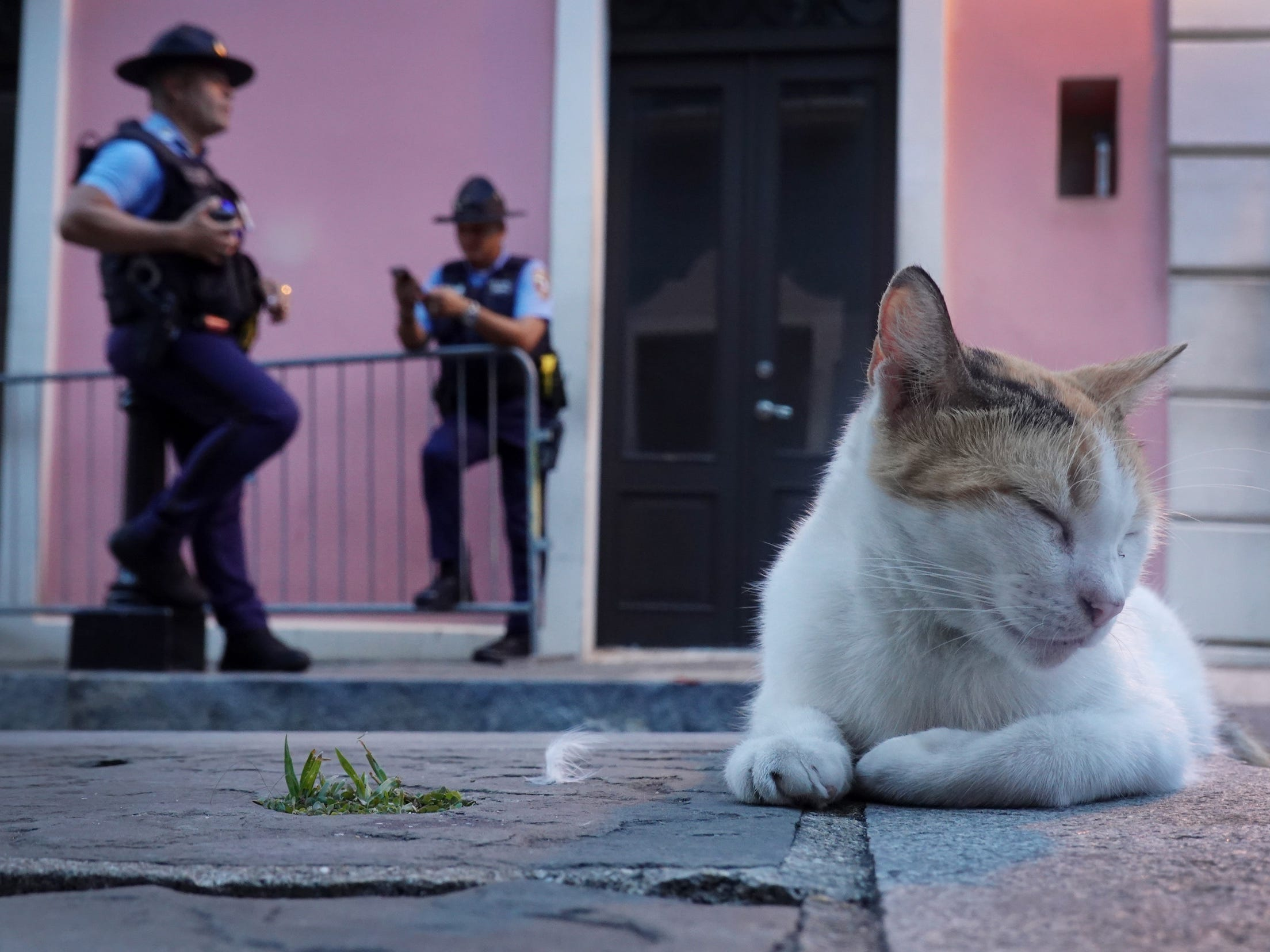 Ten months after hurricane Maria hit Puerto Rico a cat rests on a sidewalk in old San Juan.