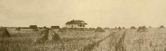 Ira Ritenour's farm in 1926 with stooks of wheat awaiting threshing. In his first year, he managed only six bushels an acre amid dry conditions.