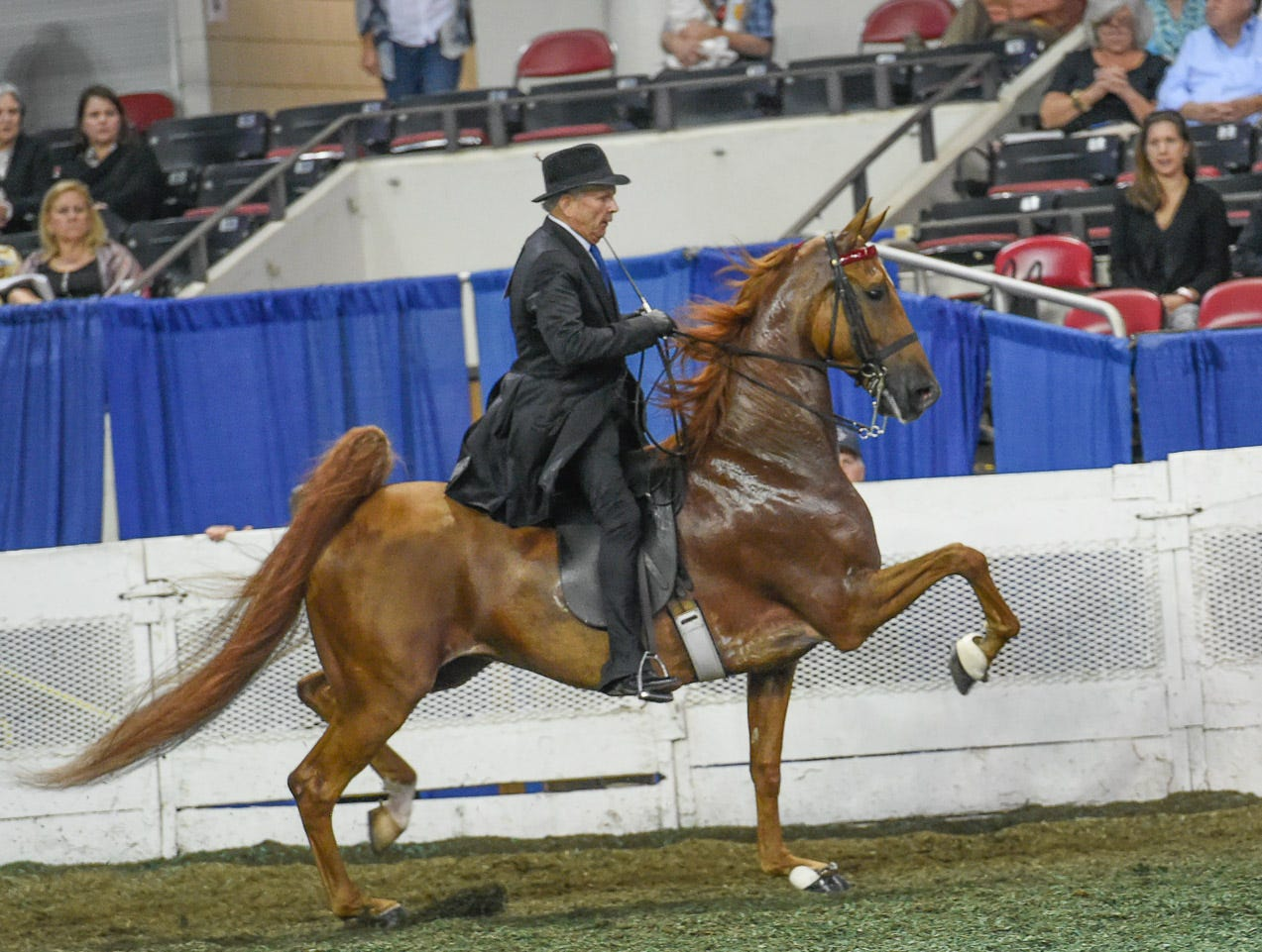 5 GAITED MARE STAKE reserve winner Kalarama's Living Legacy (151354M) (RWC) 2013 