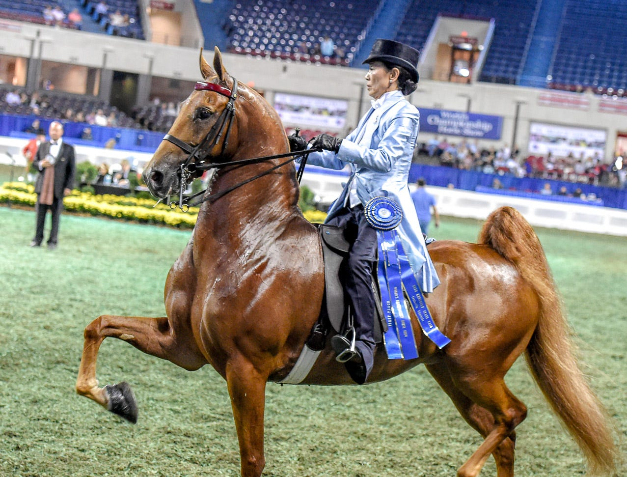 3 GAITED LADIES AM 15.2/U DIV I winner 
