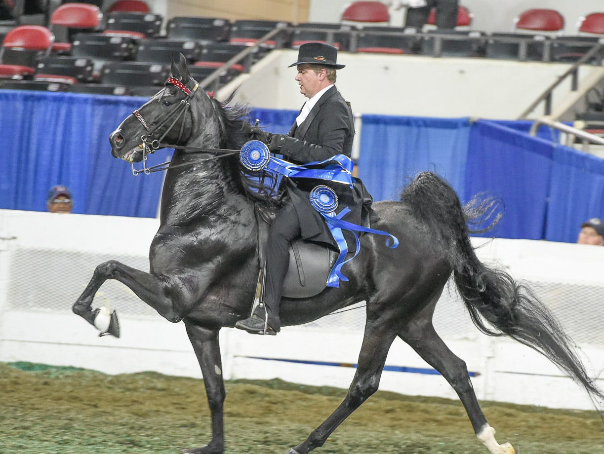5 GAITED MARE STAKE winner Divergent (150912M) (WC, RWCC) 2011 