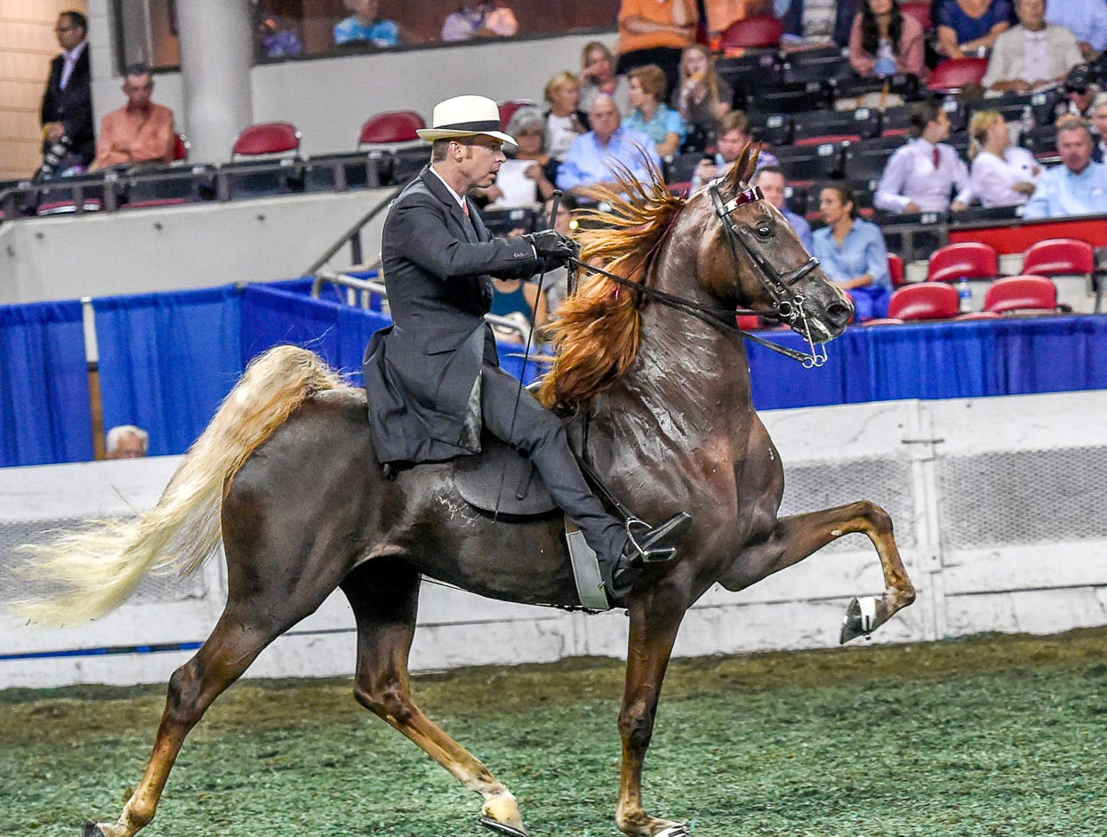 ASR NATIONAL 3 YEAR OLD FUTURITY 5 GAITED winner Dazzlelight (152729M) (WC) 2015 